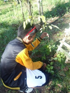Homechoice-tree-planting